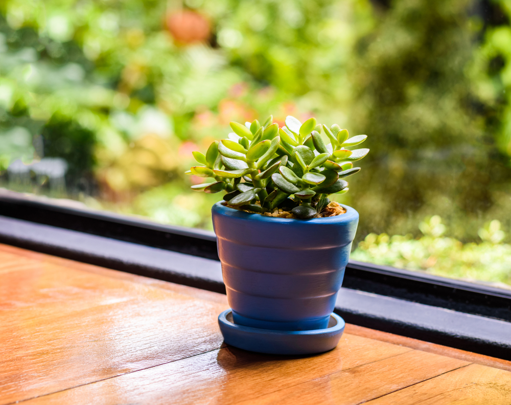 The Complete Guide to Office Décor - CardsDirect Blog
