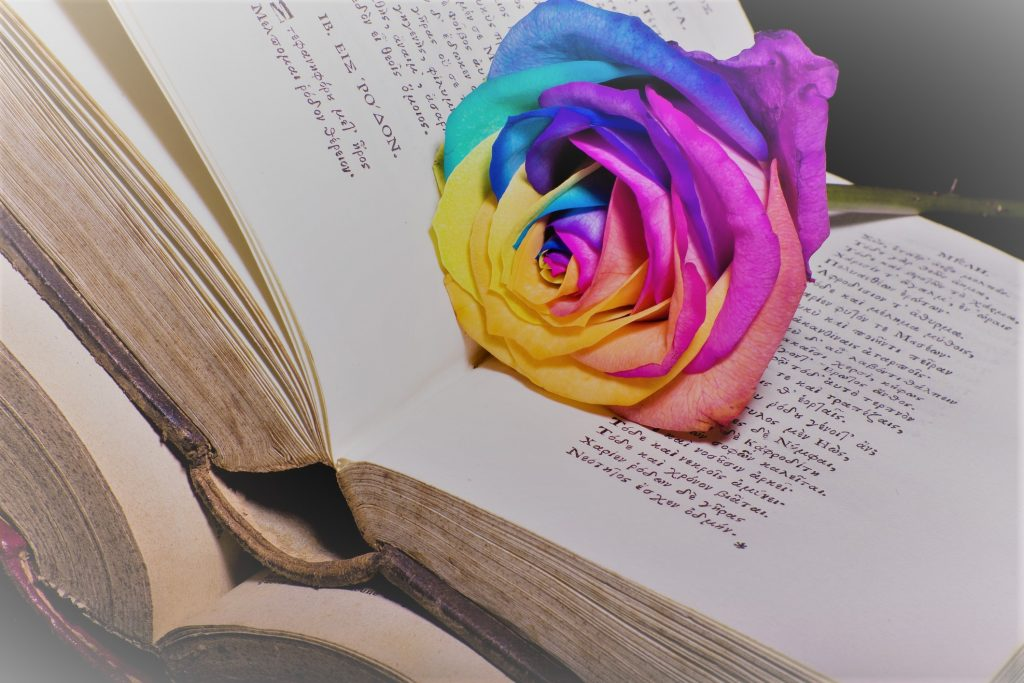 Vibrant multicolored flower lain on an open book.