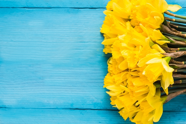 Yellow flowers on a blue table